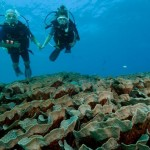 Diving_Matava_WEB_ (23)