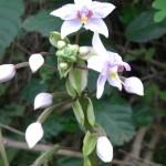 Flora Wild flowers