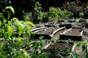 The organic garden at Matava in Kadavu, Fiji