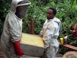 Community Partnership Kadavu Organic Honey Program, Fiji