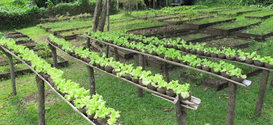 Slider Organic Garden