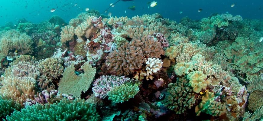 Slider Coral Reef